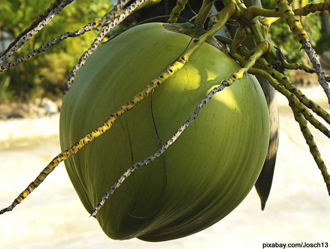 kokosöl-anwendungen-nuss
