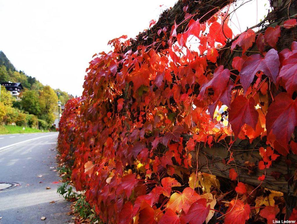 Tipps gegen Herbstblues