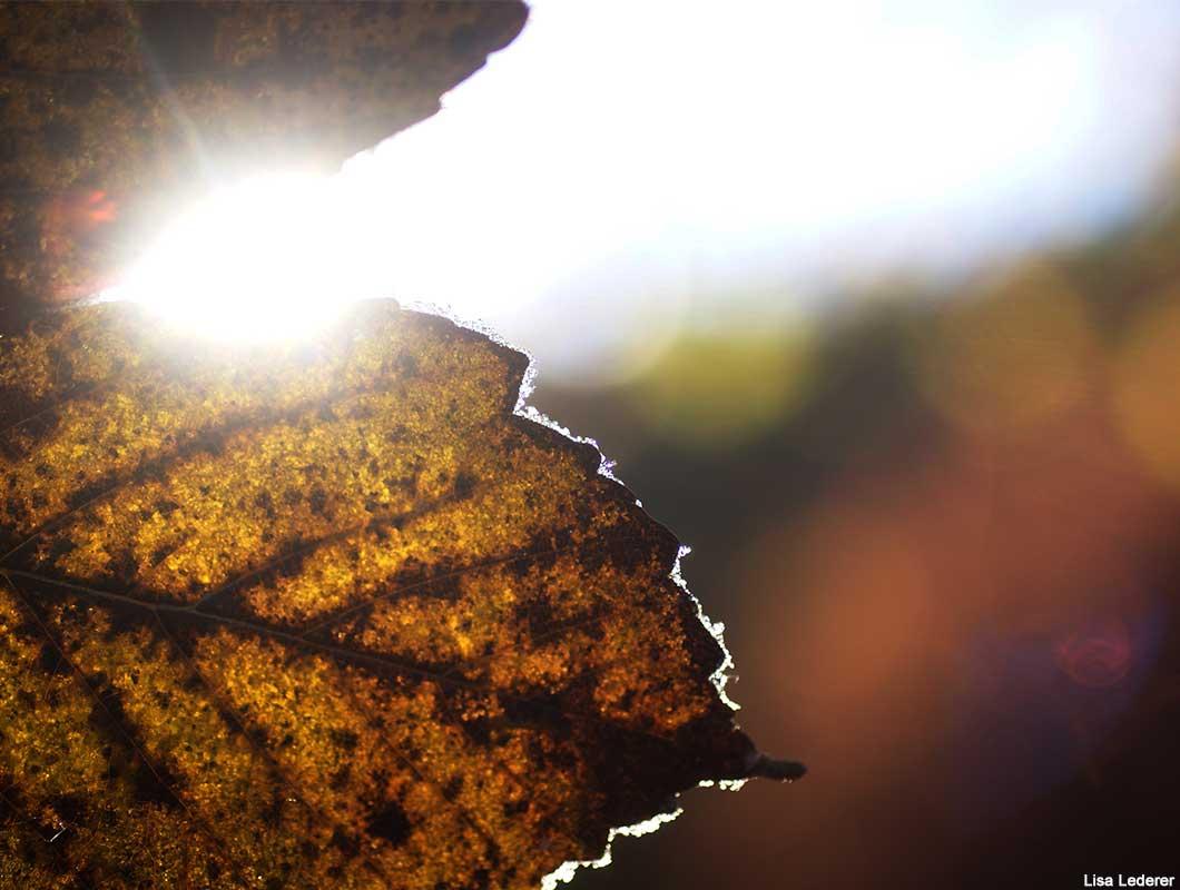 November Herbststimmung