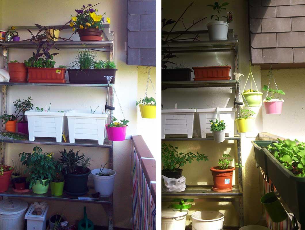 minibalkon-pflanzen