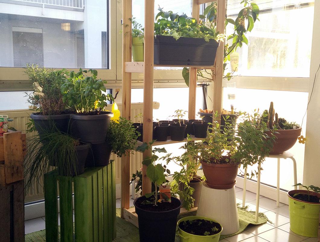 Die besten tipps f r deinen mini balkon deko pflanzen for Deko ideen mit pflanzen