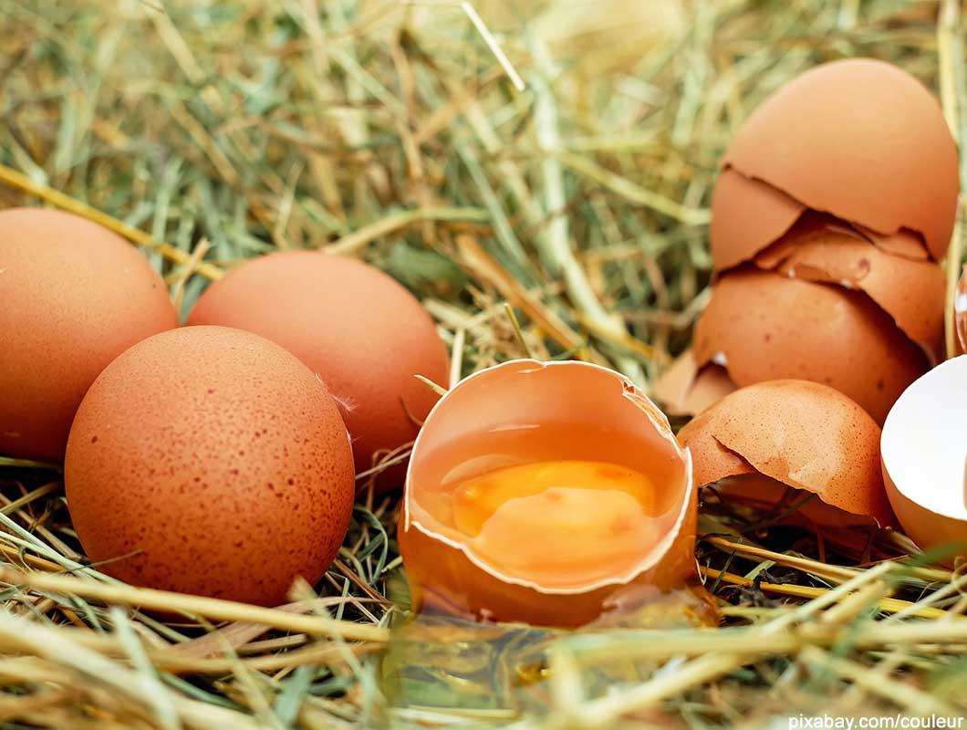 gesunde nahrungsmittel eier