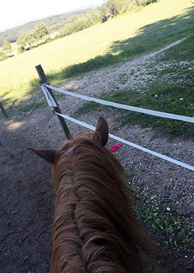 pferderuecken