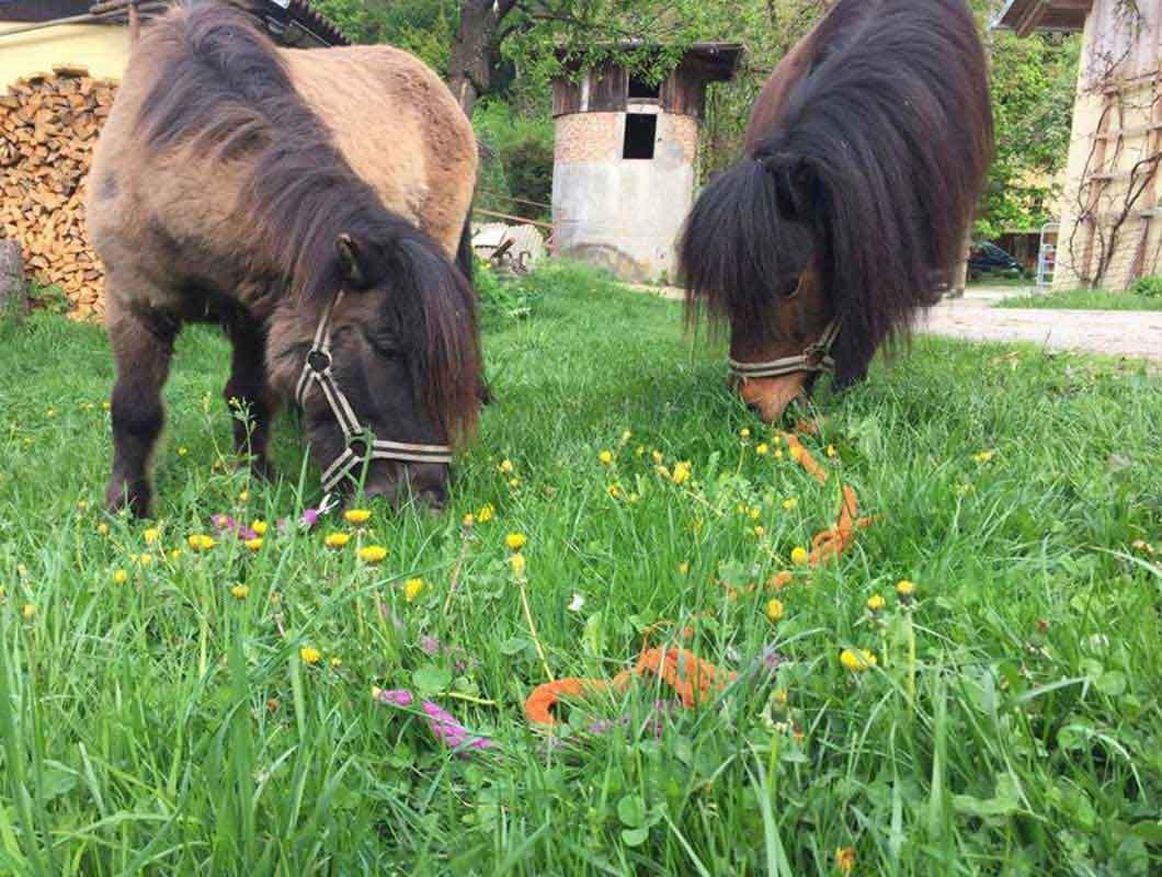 reiten-anfangen-pferde-mit-wiese