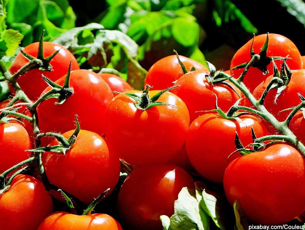 Tomaten gegen Muskelkater