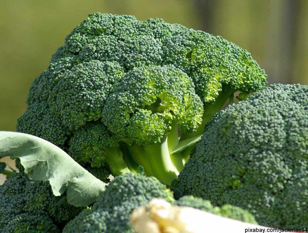 Brokkoli ist ein Lebensmittel mit wenig Kalorien