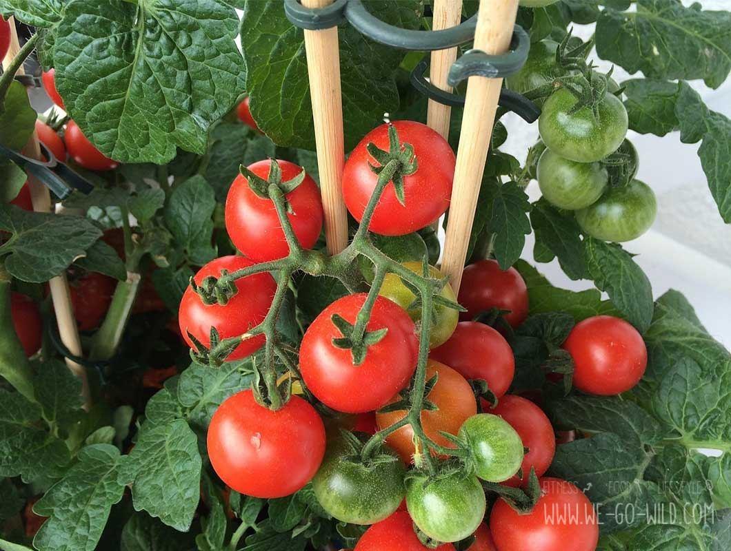 tomaten selber ziehen im eierkarton gew chshaus. Black Bedroom Furniture Sets. Home Design Ideas