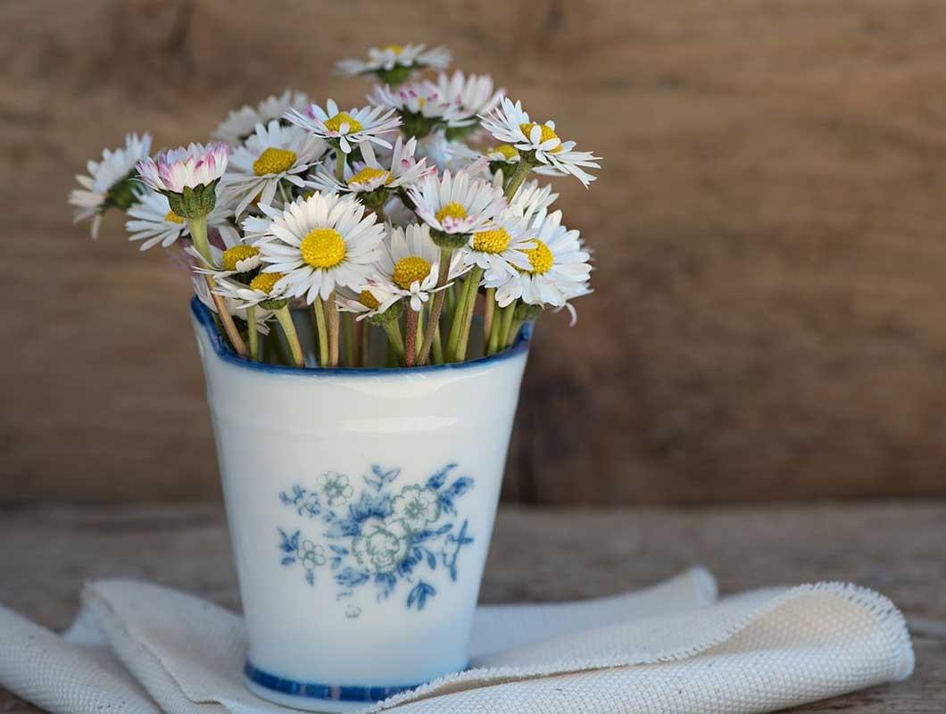 essbare frühlingsblumen gänseblümchen
