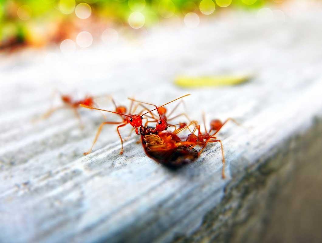 Die besten und effektivsten Hausmittel gegen Ameisen in der ...