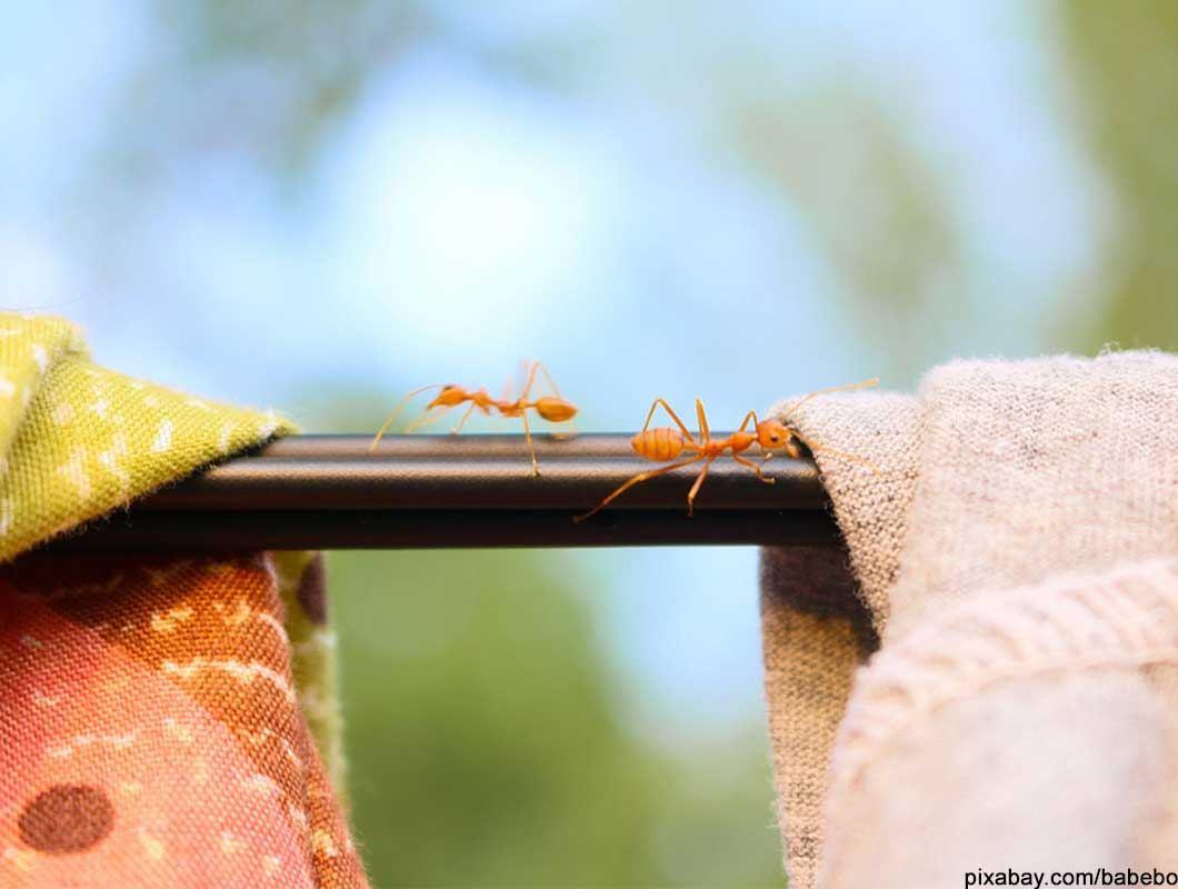 Die besten und effektivsten Hausmittel gegen Ameisen in der Wohnung