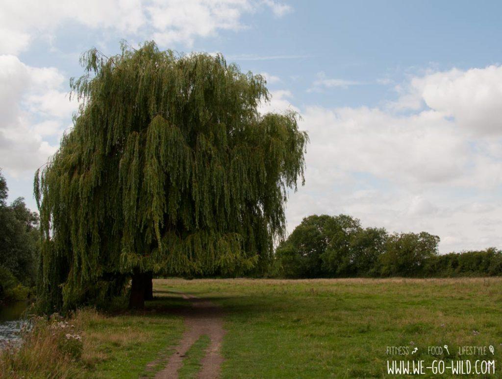 Cambridge Grantchester