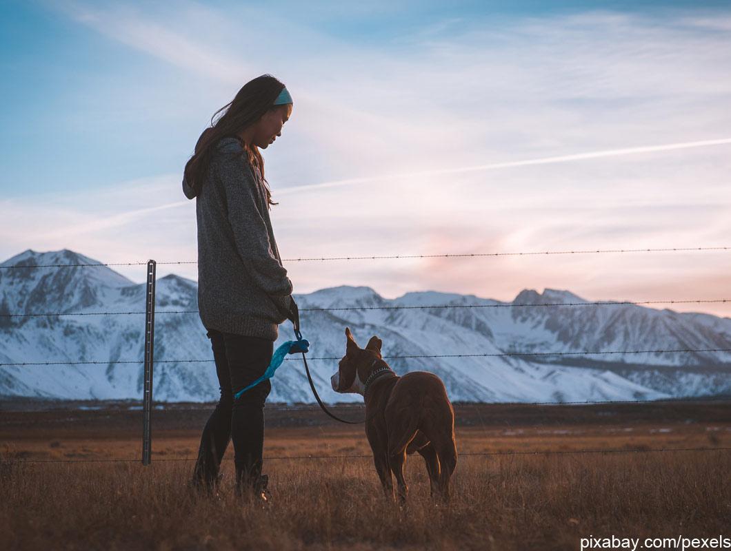 Welcher Hund Passt Zu Meinem Sternzeichen