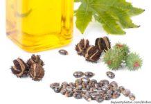 Rizinusöl für Haare und Haut