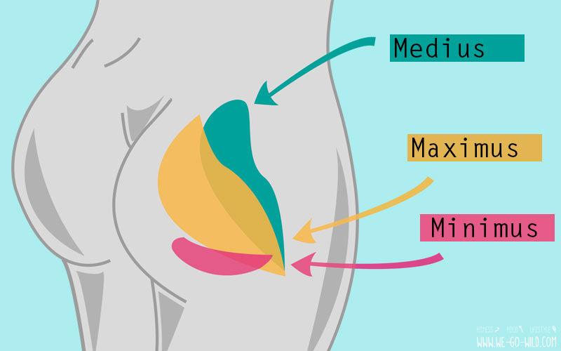Po Typen Anatomie - So sind deine Popo Muskeln aufgebaut