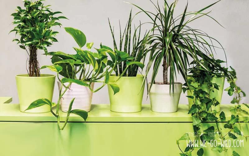 Pflanzen im Schlafzimmer - 9 Luftreiniger helfen beim Schlafen