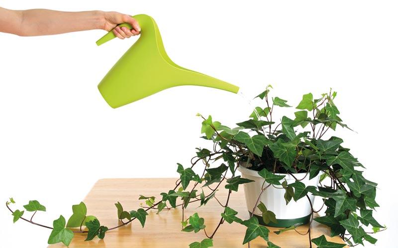 pflanzen im schlafzimmer 9 luftreiniger helfen beim schlafen. Black Bedroom Furniture Sets. Home Design Ideas