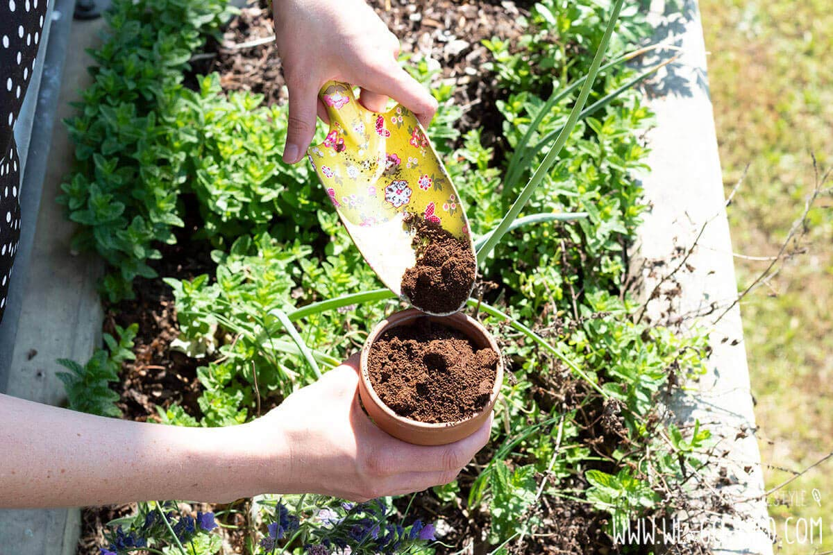 Kaffeesatz als Dünger für Garten und Topfpflanzen WE GO WILD ~ 06015336_Kaffeesatz Dünger Sukkulenten