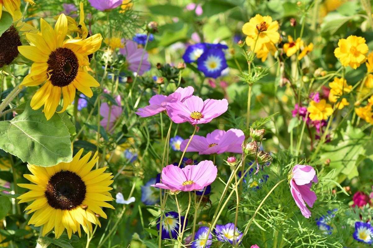 Gartentrends 2021 - Blumenwiese anlegen